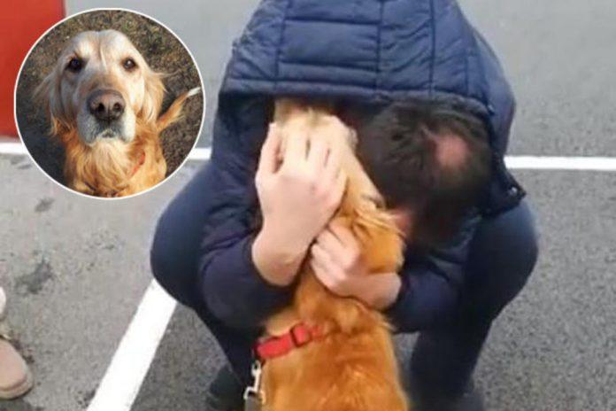 По три години го пронајде своето милениче: Човек од Белград не може да ги запре солзите (ВИДЕО)