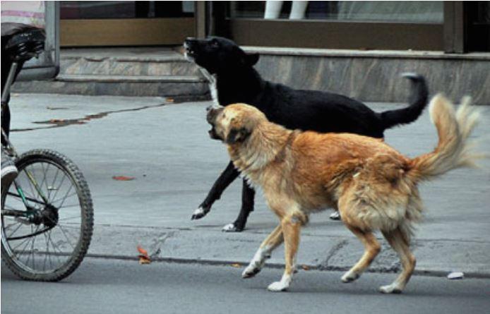 Граѓаните се жалат: Охридските улици личат на стационар за улични кучиња (ВИДЕО)