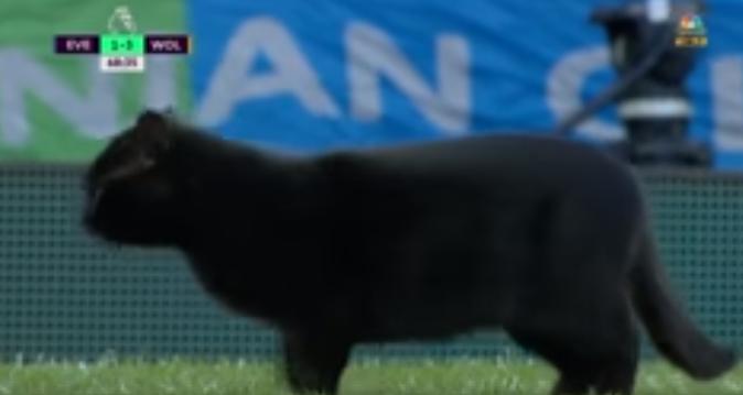 Црна мачка донесе баксуз на теренот и го прекина натпреварот меѓу Евертон и Вулверхемптон (ВИДЕО)