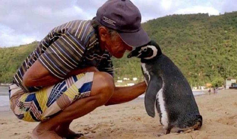 Неверојатна приказна: Секоја година пингвин препливува 8.000 километри за да го посети човекот кој го спасил (ВИДЕО)
