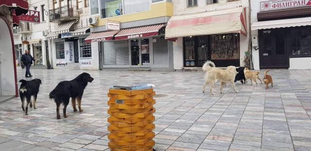 ФОТО: СДСМ и Константин Георгиески немаат капацитет да го решат проблемот со бездомните кучиња