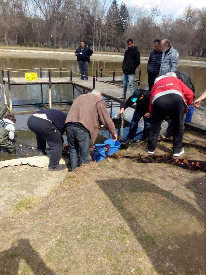"""ЗСРРК """"Вардар"""" успешно спроведе акција за спас на рибниот фонд поради чистење на езерцата во Градски парк"""