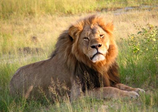 Лав стар 9 години го уби својот сопственик