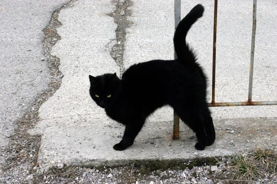 Суеверие поврзано со црните мачки: Зошто велиме дека носат несреќа?