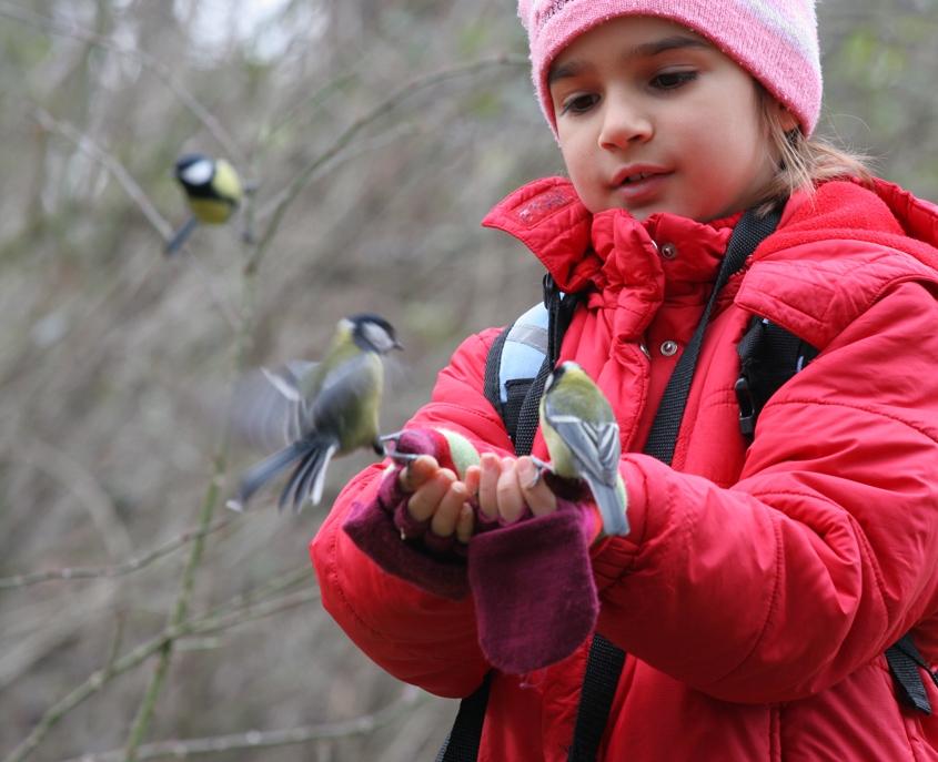 ДЕЦА И ПРИРОДА: Птици без страв земаат храна од малечката детска рака (ВИДЕО)