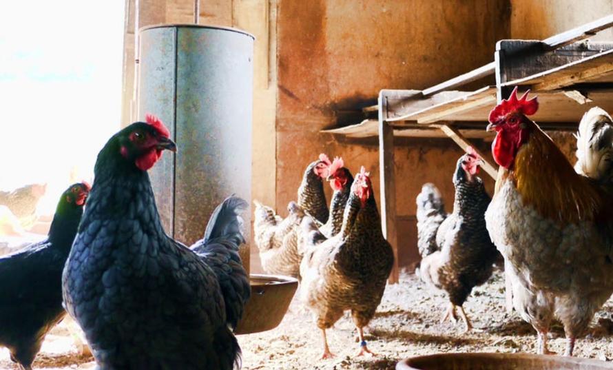 Силувал 15 пилиња, сега тврди дека му треба помош