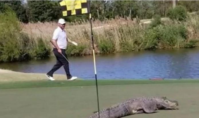 Си играл голф, па остана шокиран: Снимил сцена која многумина преплашила (ВИДЕО)