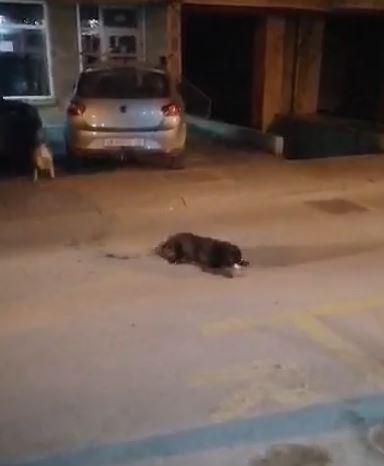 ВОЗНЕМИРУВАЧКО ВИДЕО: Во Кисела Вода во близина на средно училиште отруено куче кое безпомошно се влечеше по улица