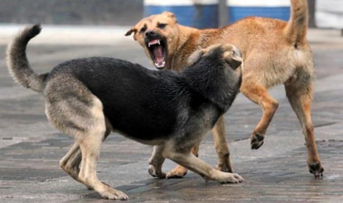 Кучиња скитници нападнале граѓани од Центар и Кисела Вода