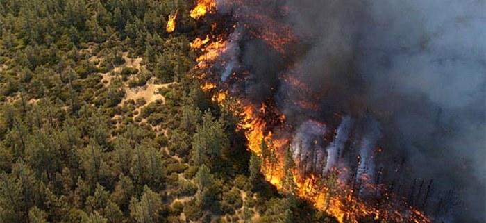 Голем пожар на границата со Бугарија