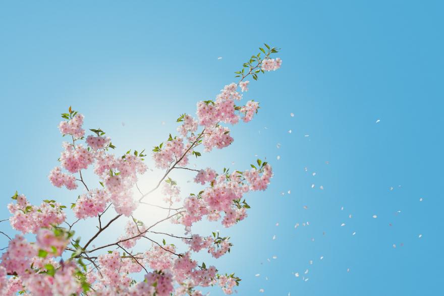 Дневен хороскоп за 6 април – Љубовта цвета за Лавовите и Водолиите.