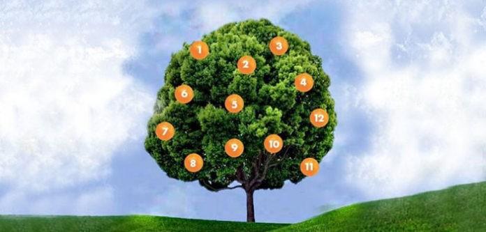 Дрво на желбите: Изберете плод и дознајте дали ќе се исполни вашата желба