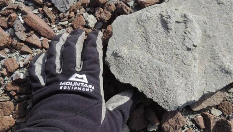 На Антарктикот откриена стапалка од диносаурус стара 200 милиони години
