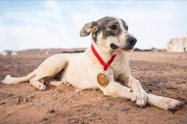 Кучето Кактус стана херој на една од најтешките трки во светот