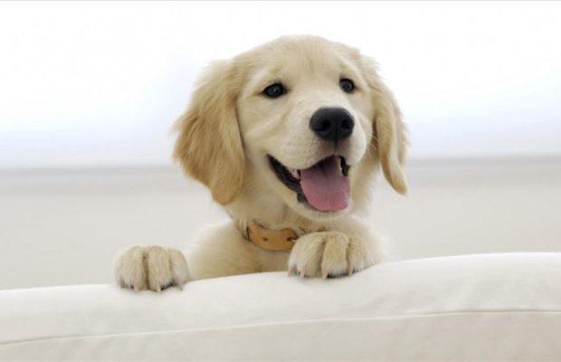 Истражување: Мозокот на кучето реагира на говор како и мозокот на човекот