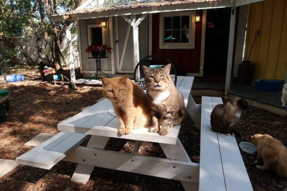 """""""Пензионерски дом"""" за мачки на Флорида"""