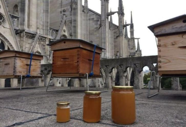 ЧУДО: Во пожарот изгоре огромно историско богатство, но преживеаја 200.000 пчели