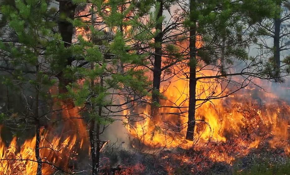 Заев и неговиот директор за заштита и спасување се целосно неспособни да се справат со пожарите