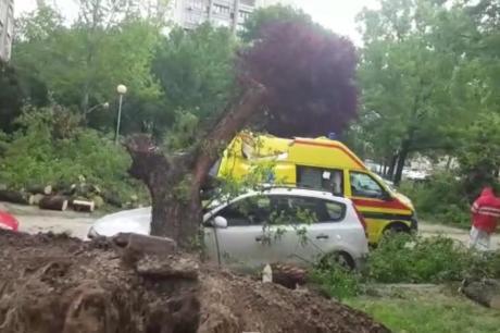 Возило на Брза помош смачкано од огромно дрво: Интервенирале пожарникари и полиција (ВИДЕО)