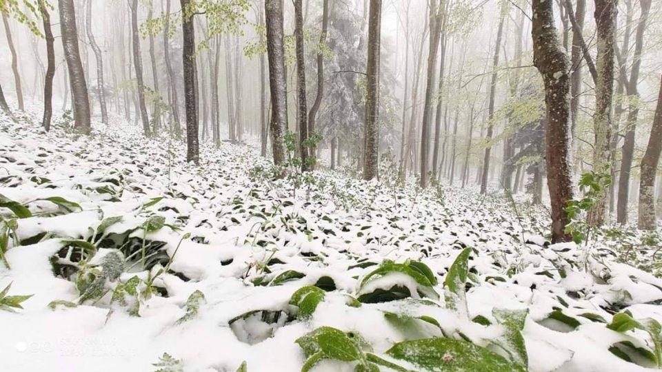 Снегот доаѓа кон Македонија: Хрватска утрово наликува на вистинска зимска идила- УХМР со најава за пресврт во времето и кај нас (ФОТО)