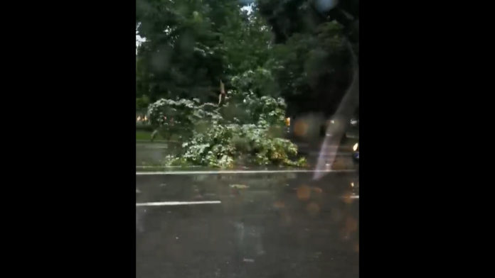 "ВИДЕО: ""Андреа"" корне дрва во центарот на Скопје"