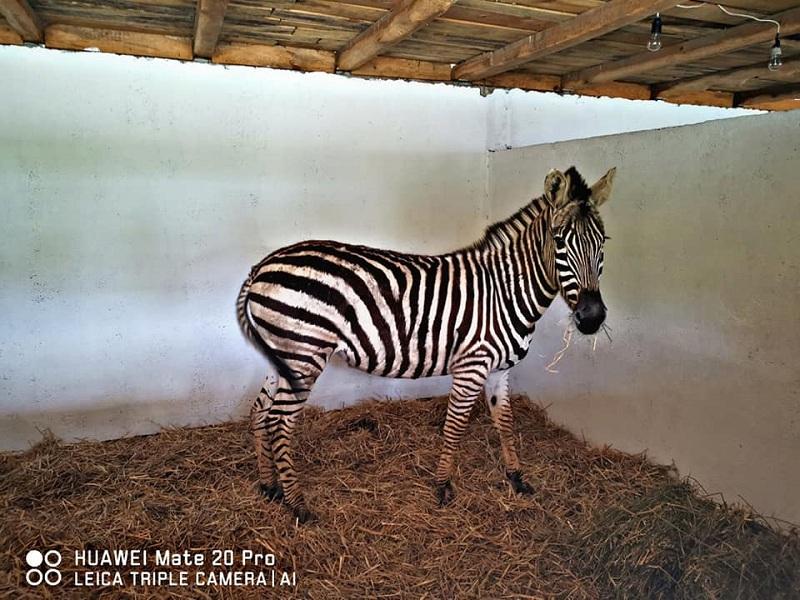 Пристигнаа нови животни во Скопје ЗОО