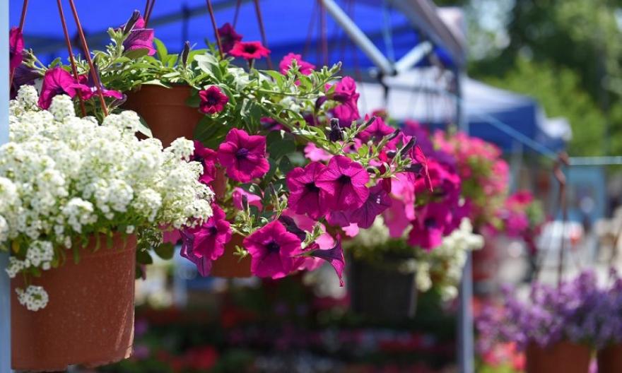 Скопскиот цветен фестивал и годинава во Градскиот парк