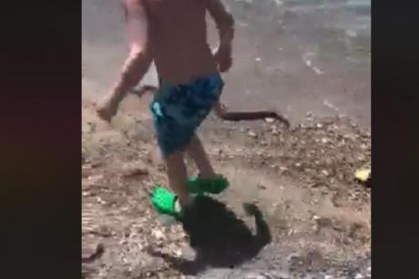 Паника на црногорска плажа: Додека деца си играа се појави змија долга еден метар (ВИДЕО)