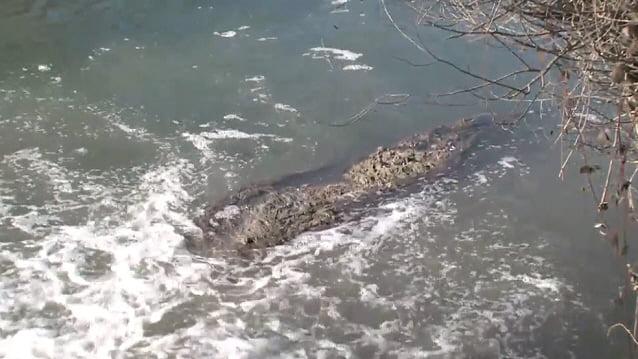 Внимавајте: Фекалии се влеваат во Охридско езеро! Еколошка брука среде туристичка сезона