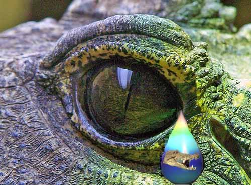 """Од мит до вистина: Дали """"крокодилските солзи"""" навистина постојат?"""