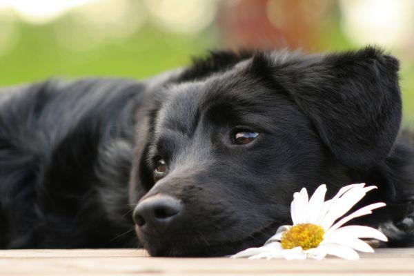 Анкета на Вег: Внимавај, ќе ти раскине ако не го сакаш и кучето