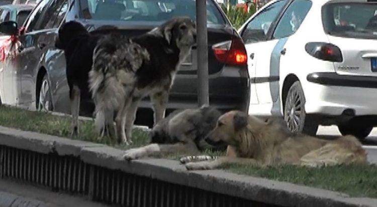 ВИДЕО: Масовно труење на кучиња во Пехчево, според градоначалникот снимките се стари и веќе не се актуелни