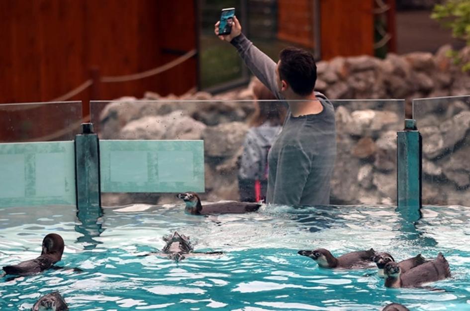 Ќе посакате да ја посетите белградската зоолошка: Новата атракција се слатките пингвини (ФОТО)
