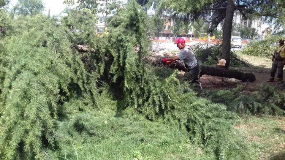 Шилегов сече дрва во општина Аеродром