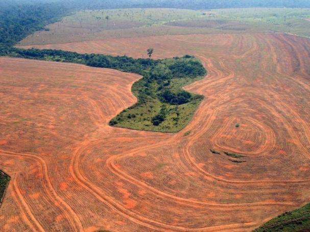 Амазонска прашума исчезнува со брзина од три фудбалски игралишта во минута