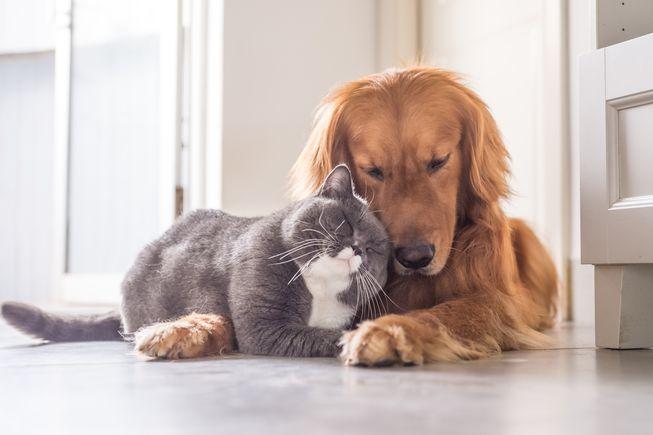 Истражување: Мачињата и кучињата го убиваат стресот