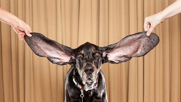 Ова куче влезе во Гинисовата книга на рекорди, погледнете зошто (ФОТО)