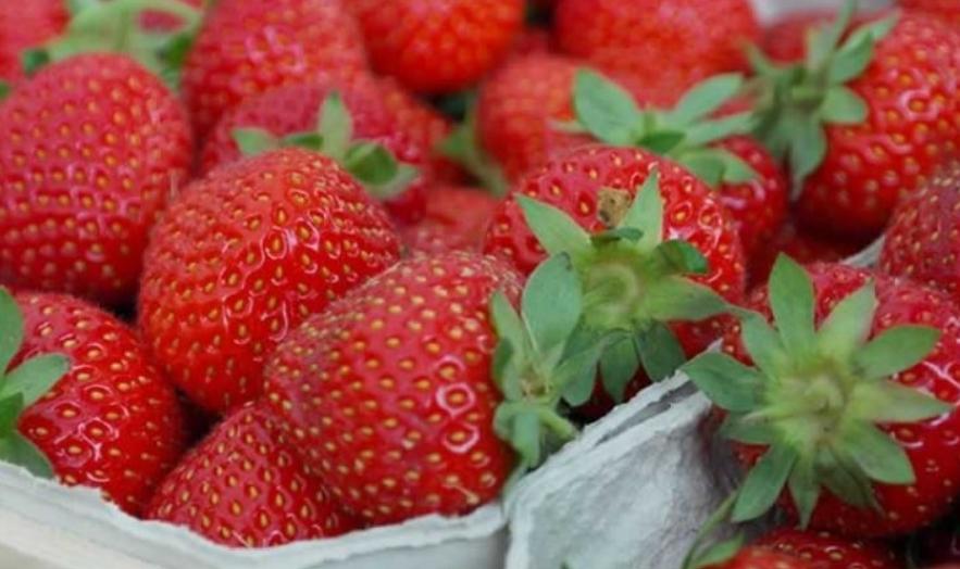 Има само едно правило: Како да ги чувате јагодите?