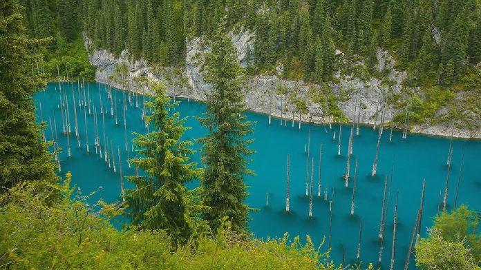ВЕРУВАЛЕ ИЛИ НЕ: Ова е најчудната шума во светот во која дрвата растат наопаку (ВИДЕО)