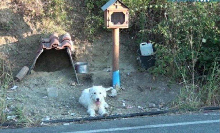 Куче 18 месеци го чека сопственикот на местото каде што загинал во сообраќајна несреќа (ВИДЕО)