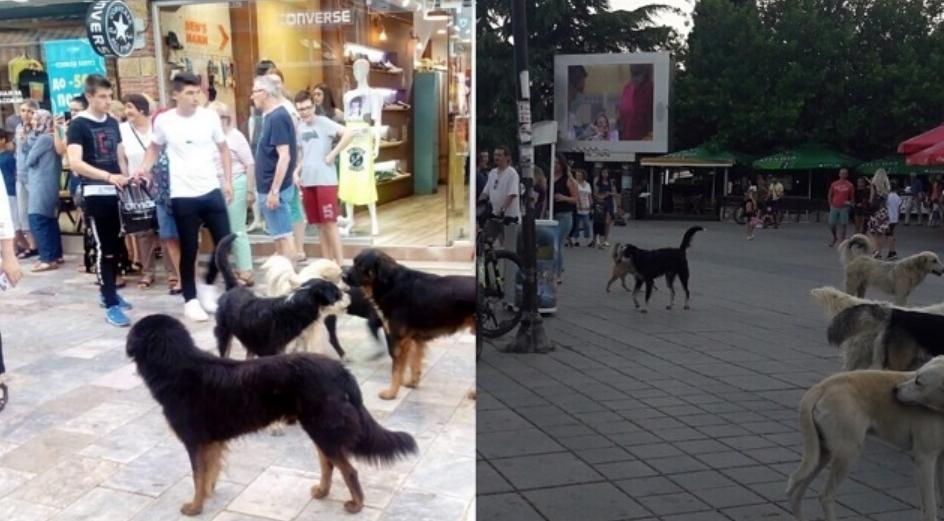 Охрид полн со туристи, но и со глутници бездомни кучиња: Општинските власти немаат решение за проблемот (ФОТО)