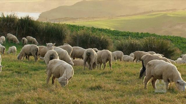 На овој остров бараат овчар, нудат плата од 25.000 евра