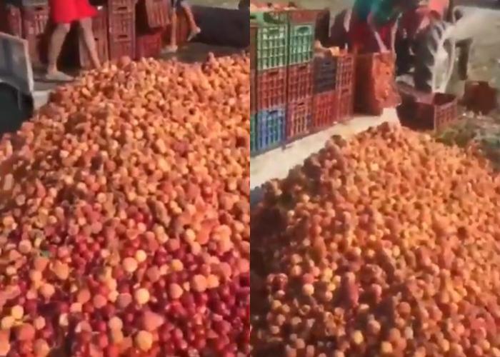"""""""Еве како се откупуваат праски во Росоман"""": Земјоделците разочарани од власта повторно ги фрлаа праските (ВИДЕО)"""