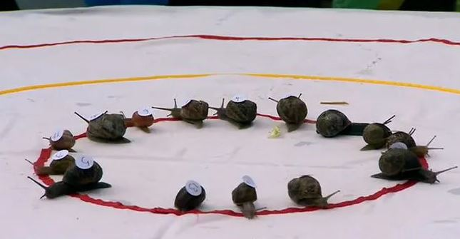 ВИДЕО: Одржана традиционалната трка на полжави, ова е наградата за најбрзиот