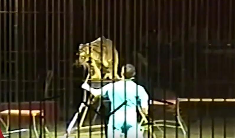 Тигри растргнаа скротител пред настап во циркус (ВИДЕО)
