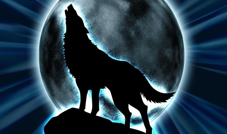 Оваа кратка приказна за волците ќе ви ја раскаже најважната животна лекција