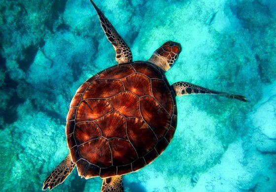 На Соломонските Острови: Биолози открија желка што свети ноќе