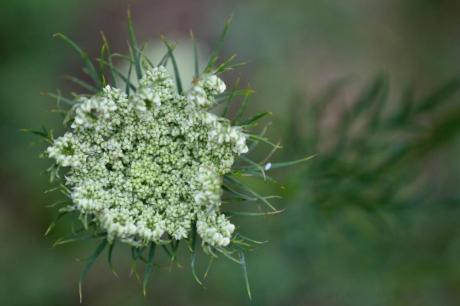 Природен лек за многу болести – билка која го запира крварењето, а помага и при големи болки