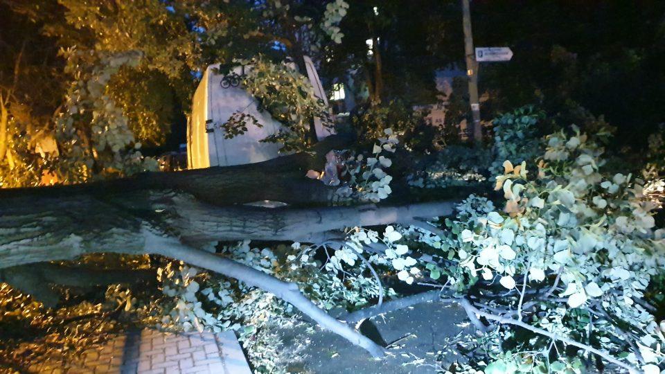 ФОТО: Силно невреме во Скопје- Се сруши огромно дрво