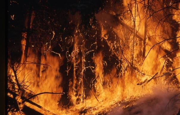 Пожар на Хвар: Го гаснат 40-на пожарникари и два Канадера